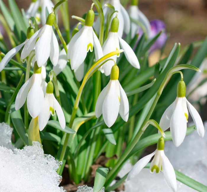 Thumbnail for the post titled: С весенним праздником 8 марта!